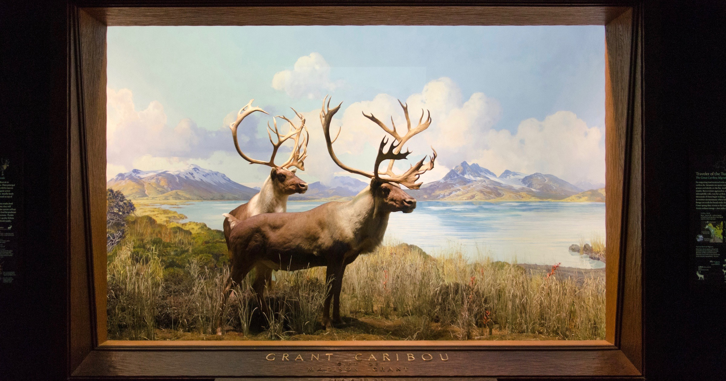 Cancel Caribou? Another Questionable Tribute at the American Museum of Natural History