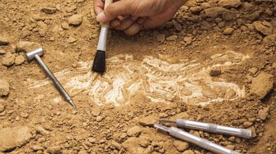 paleontology-tn