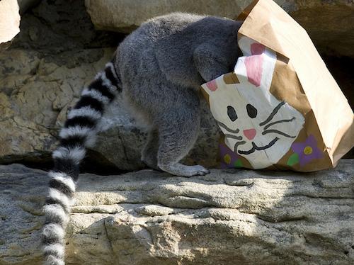 Lemur v. bag.jpg