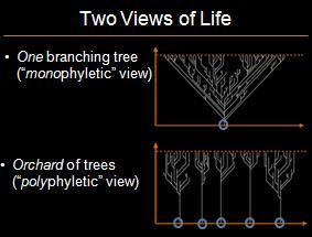 treevorchard.jpg